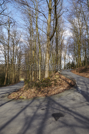 road serpentine into a forest