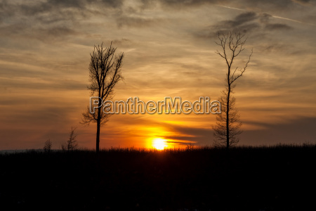 beautiful sunset behind a clump of