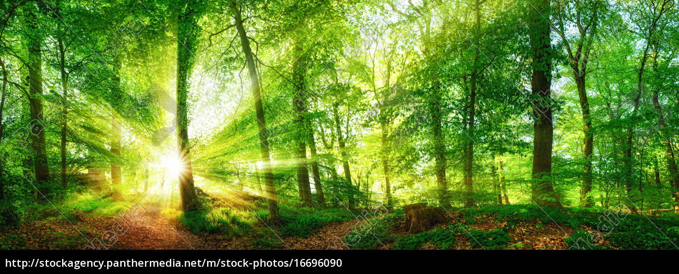 wald, panorama, mit, durch, blätter, leuchtenden - 16696090