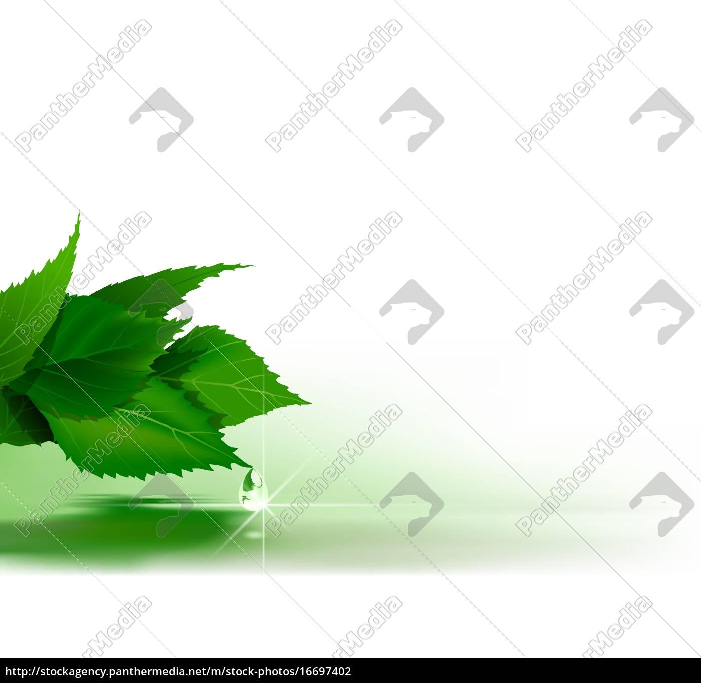 grüne, blätter, über, wasseroberfläche - 16697402