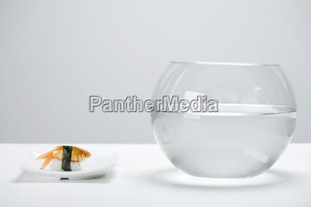 goldfisch hergestellt wie nigiri sushi und