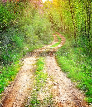 gehweg in abgelegenen laubwald