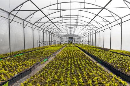 horticulture industry green plants growing