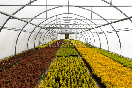 greenhouse full of colorful plants at