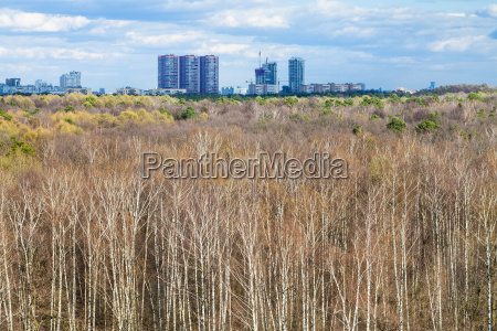 birch forest and city on horizon