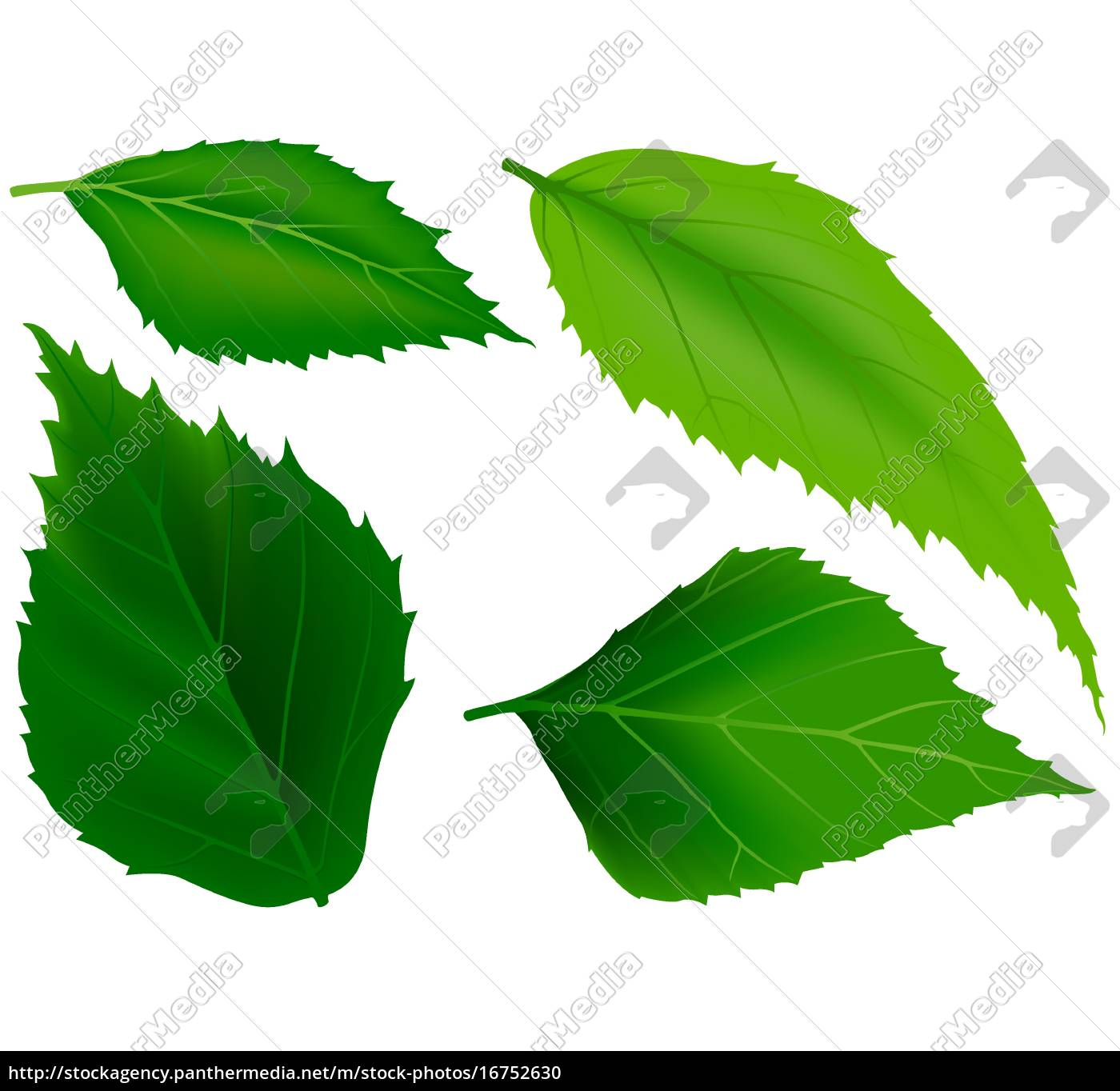 grüne, blätter - 16752630