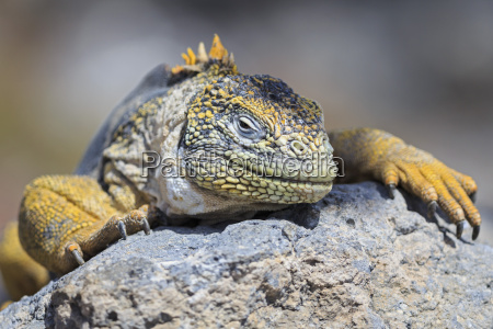 fahrt reisen farbe tier reptil eidechse