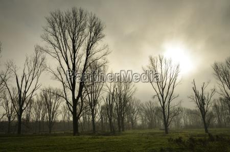 baum winter wolke deutschland brd bundesrepublik