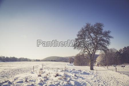 deutschland kaiserslautern pfaelzerwald winterlandschaft bei trippstadt