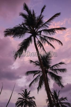 palmen himmel urlaub reise lila palme