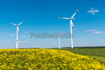 wind turbines and yellow flowers in