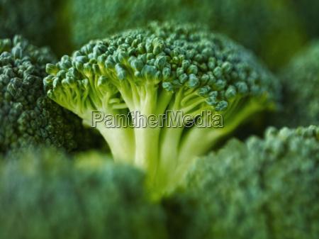 gesundheit detail gruen gruenes gruener gruene