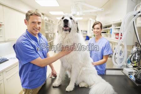 tierarzt s pruefung hund in vet