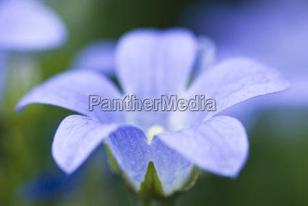 detail blume pflanze gewaechs bluete erbluehen
