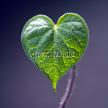 blatt baumblatt detail gruen gruenes gruener