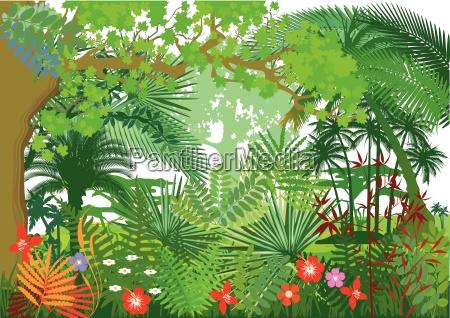 regenwald jungle