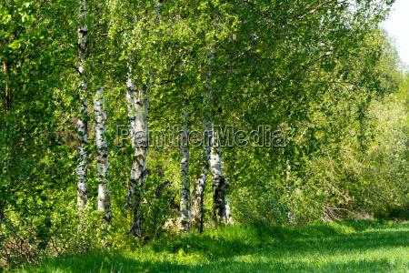 fruehjahr landschaftsbild landschaft natur tscheche tschechisch
