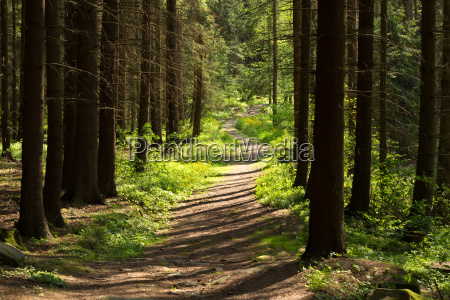 rural forest path in the park