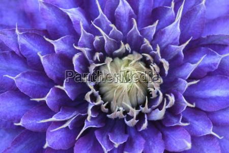 lila violettes farbkreis spektrum