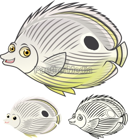 high quality four eye butterfly fish