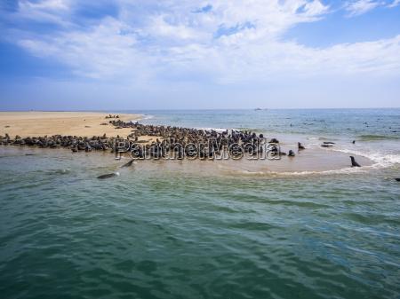 namibia walvis bay cape fur seals