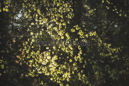 blatt baumblatt baum laubbaum sonnenlicht springen