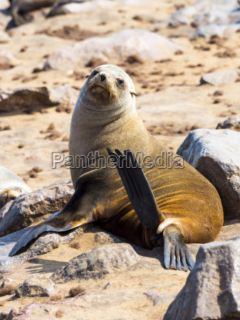 farbe tier saeugetier afrika namibia outdoor
