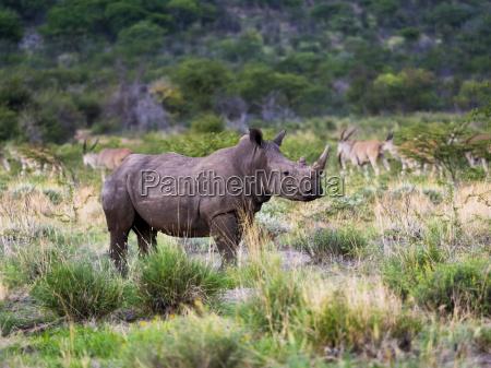 namibia outjo ongava wild reservat weites