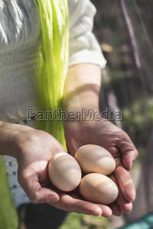 womans hands holding three brown eggs