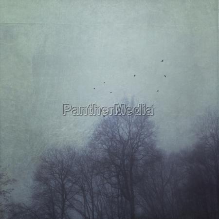 baum flug winter tier vogel nebel