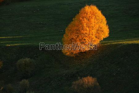 spain asturias autumnal tree at natural