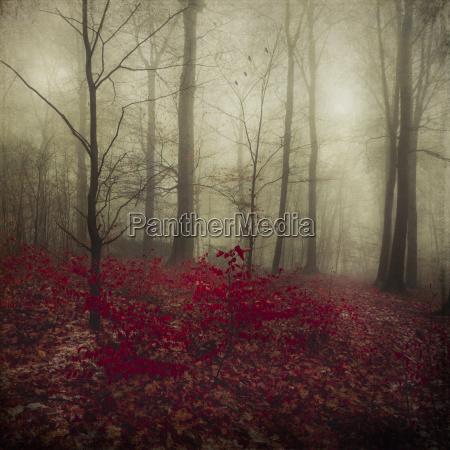 baum winter blaetter laubbaum laubwald deutschland