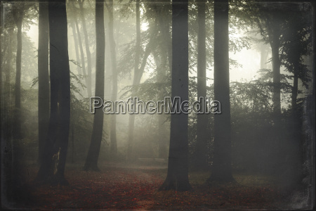 germany forest in fog