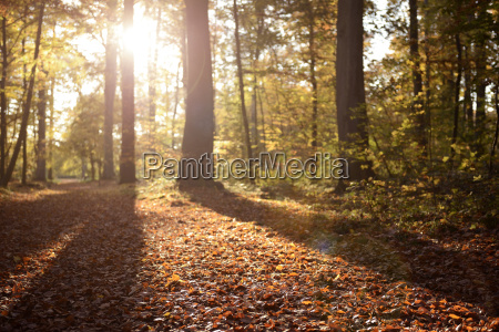 germany duesseldorf benrath forest trees and