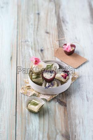 stilleben praesentieren blume pflanze gewaechs rose