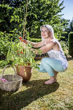 smiling mature woman with tomato plant