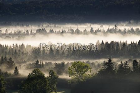 baum nebel deutschland brd bundesrepublik deutschland