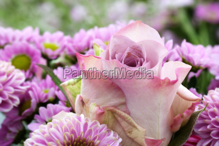 pastel rose in a bouquet of