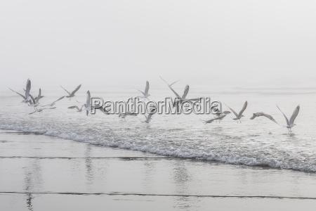 usa washington seattle long beach flying