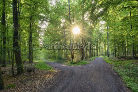germany bavaria franconia spessart track in