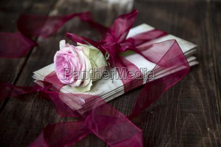 stilleben abmachung blume pflanze gewaechs rose