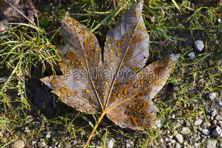 blatt baumblatt fluessig boden erdboden erde