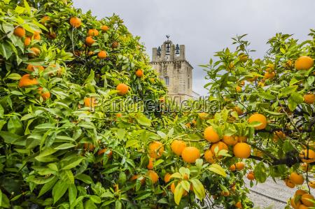 turm orange apfelsine pomeranze fahrt reisen