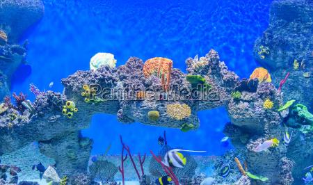 exotische unterwasserwelt des flachen wasserkorallenriffs