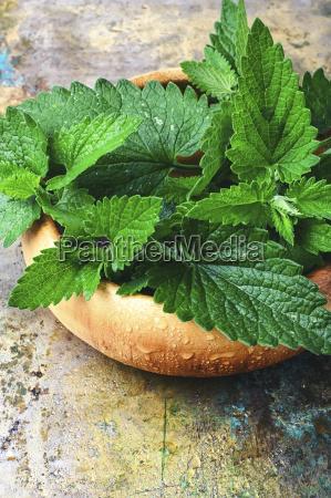 fragrant lemon balm leaves