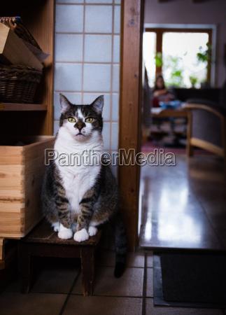 cat sitting like ancient sculpture