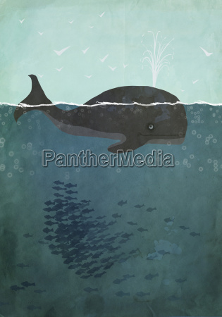 illustration of whale swimming in sea