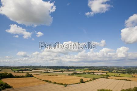 rural landscape with combine harvester harvesting