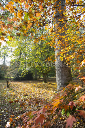 autumnal forest scene with trees and