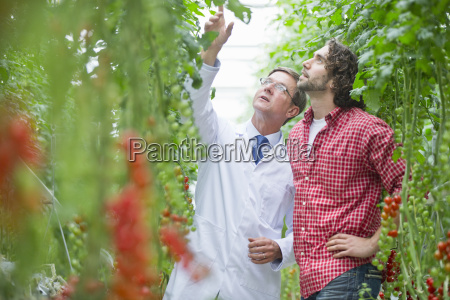 food scientist and grower looking up